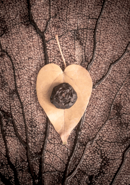 Heart-shaped lead with a seed pod in the center - symbolizing growth of love
