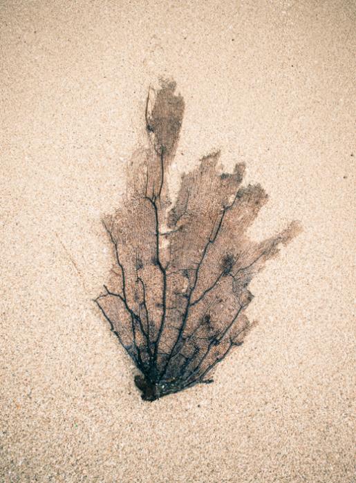 Sea fan on beach