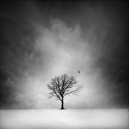 Image of a single tree with a bird flying from it