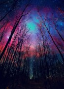 Beautiful view of the night sky through wintertime trees