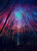 Beautiful view of the night sky through wintertime trees